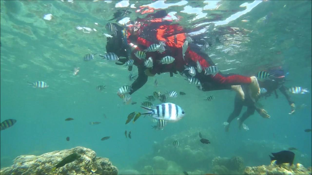Merasakan keindahan bawah laut di Pulau Tidung