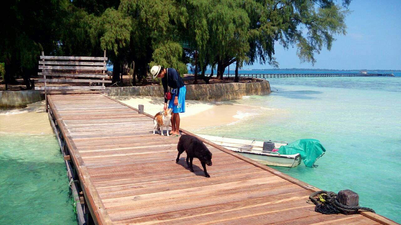 Meningkatnya jumlah wisatawan jadi berkah bagi warga sekitar Pulau Harapan